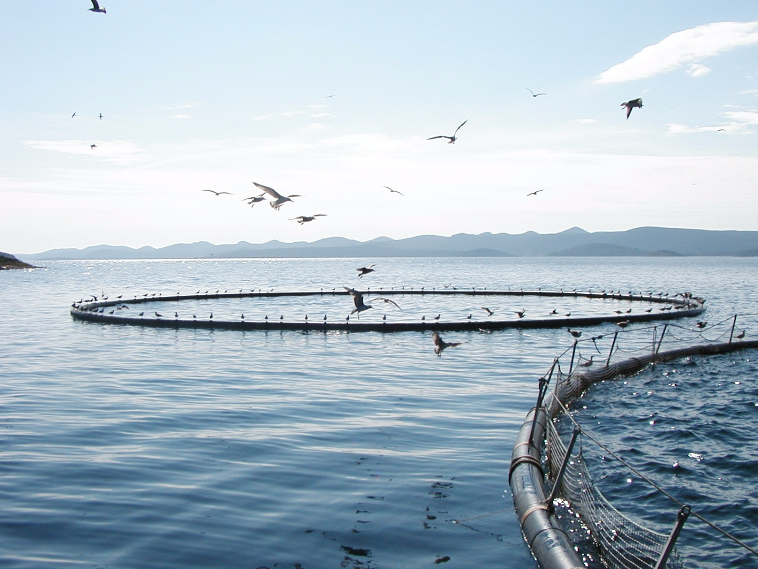 MASTER OF APPLIED SCIENCE IN AQUACULTURE CURRICULUM