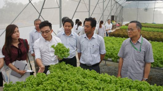Inauguration of a hi-tech hydroponic vegetable farm